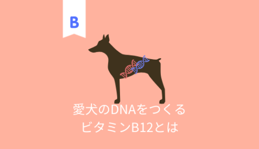 愛犬のDNAをつくる!ビタミンB12の働きと特徴