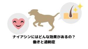 愛犬がナイアシンをとるとどんな効果があるの?働きと過剰症