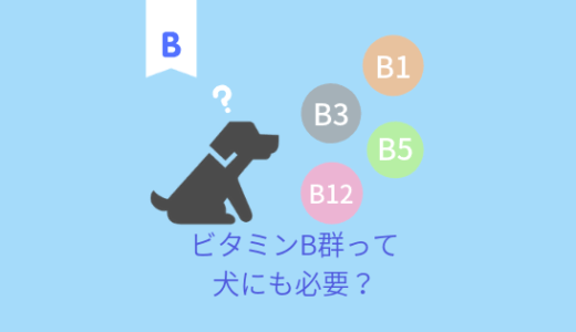 犬にもビタミンB群は必要?ビタミンB群総まとめ