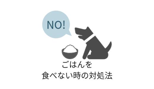 愛犬がご飯を食べないときの5つの対処法