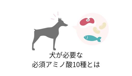 犬が必要なアミノ酸って?10種の必須アミノ酸について