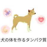 愛犬の体を作るタンパク質