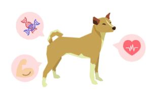 犬の体を作るタンパク質