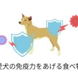 免疫力を高めている犬