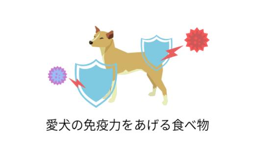 季節の変わり目に!愛犬の免疫力をあげる食べ物