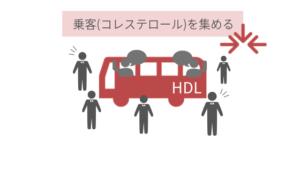 HDLがコレステロールがを集めている図