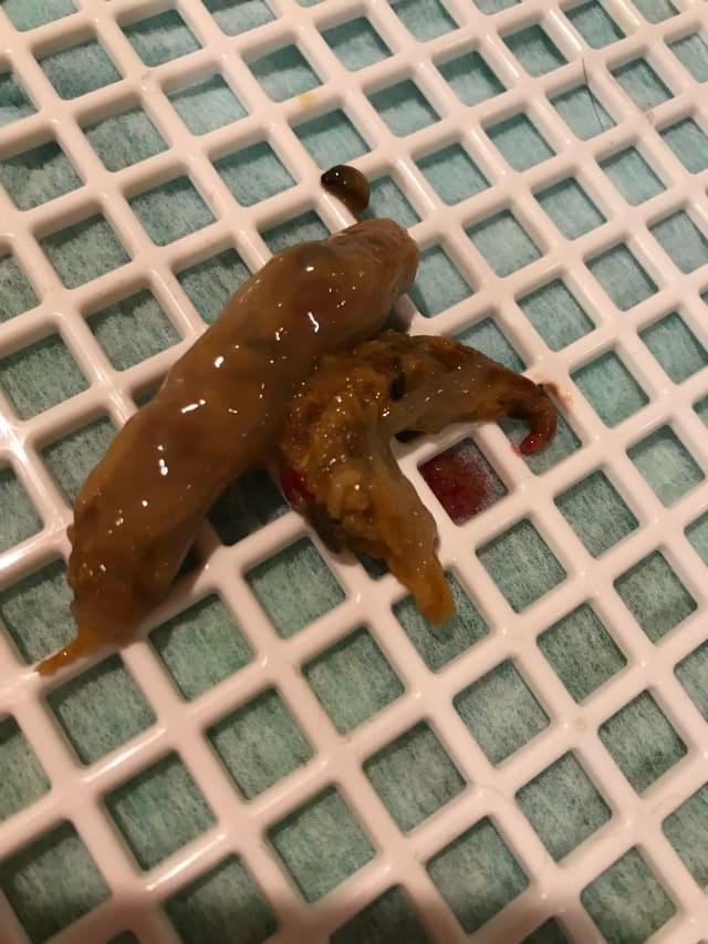 犬が鳥の骨を食べた日の粘膜便