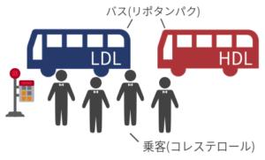 コレステロールをバスに例えている様子