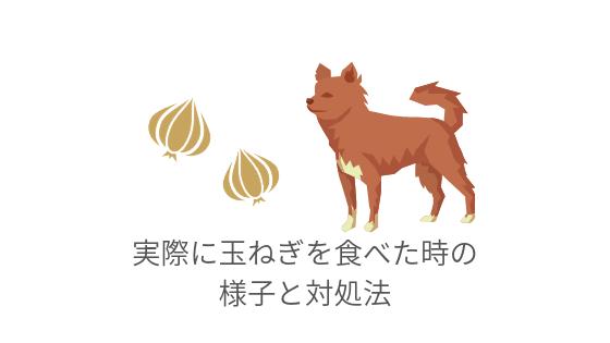 犬が玉ねぎを食べた時の実際の様子と対処法