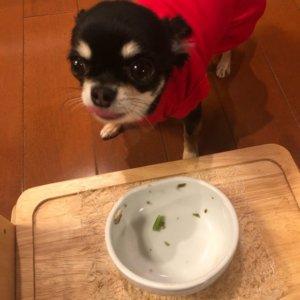 牛肉と乾物のおじやを完食する犬