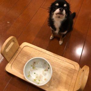 七草粥を完食した犬