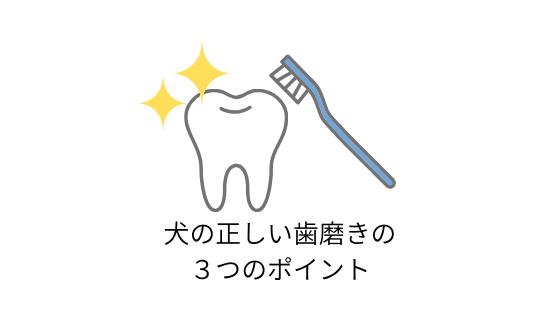犬の正しい歯磨きの3つのポイント