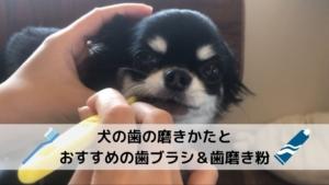 【画像つき】わたし流!犬の歯の磨きかたとおすすめの歯ブラシ&歯磨き粉