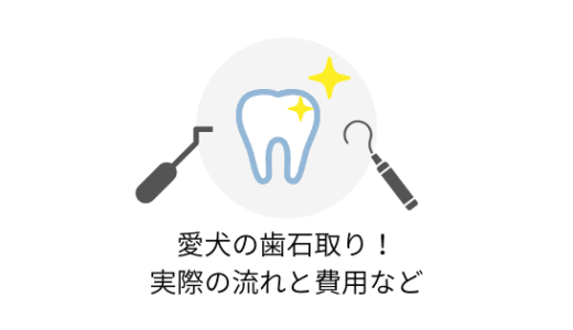 愛犬のひどい歯石を除去!歯石取りの流れや費用、術後の様子など
