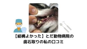 【結構よかった】とだ動物病院の歯石取りの私の口コミ