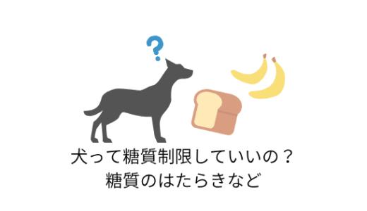 犬も糖質制限していいの?糖質のはたらきとおすすめの食べ物など
