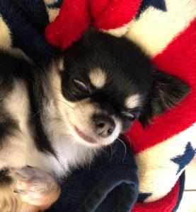 白目をむいて眠る犬