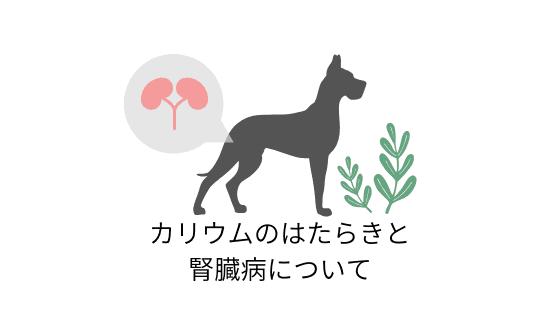 犬のカリウム数値が高いと?カリウムのはたらきと腎臓病について