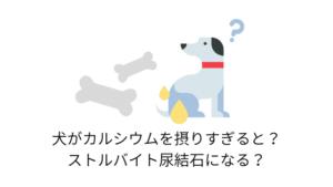 犬がカルシウムを摂りすぎると?働きとストルバイト尿結成との関係性