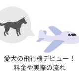 愛犬の飛行機デビュー!料金や実際の流れ、感想など