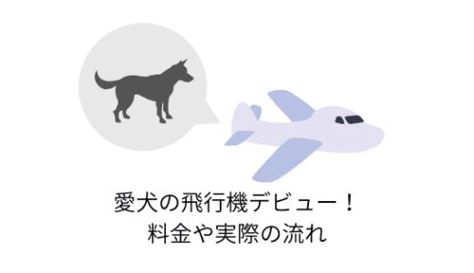 愛犬とお引っ越し!飛行機に乗るまでの実際の流れや感じたこと