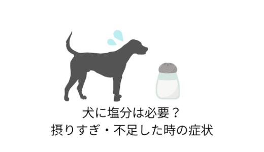 犬に塩分は必要?塩のはたらきと摂りすぎ・不足した場合の症状など