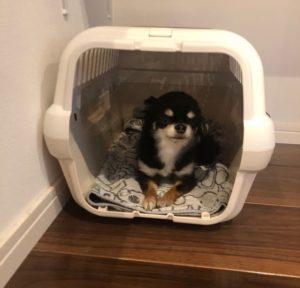 キャンピングキャリー ダブルドアに入っている犬