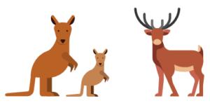 カンガルー肉や鹿肉