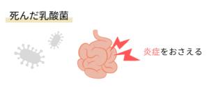 死んだ乳酸菌は腸内の炎症を抑える