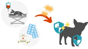 愛犬が乳酸菌をとることで病気をよせつけない体になる