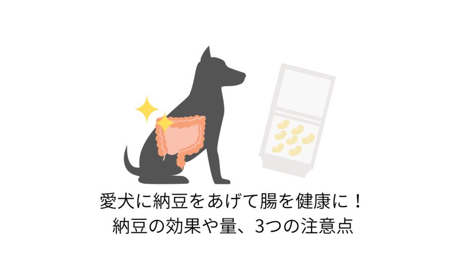愛犬に納豆をあげて腸を健康に!