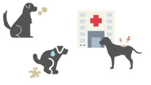 下痢をよく繰り返す犬や口臭がする犬、皮膚が弱い犬