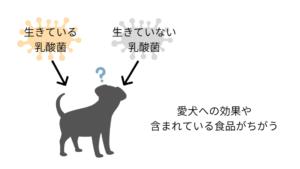 生きている乳酸菌と死滅した乳酸菌の愛犬における効果の違い