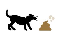 愛犬の食糞と乳酸菌