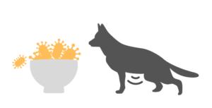犬が乳酸菌を摂りすぎるとどうなるの?