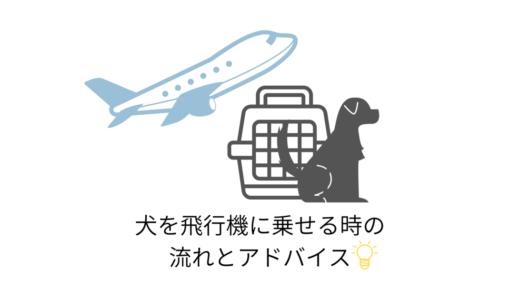犬を飛行機にのせるときの流れとアドバイス【体験談付き】