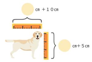 中型犬や大型犬は体重と合わせて体格でクレートを選ぼう!