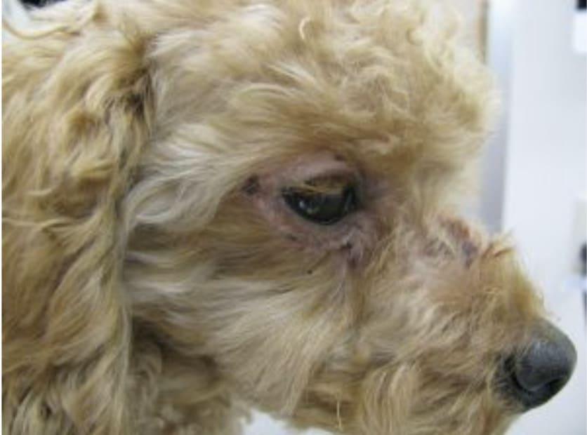 犬の皮膚病 西山動物病院スタッフブログ