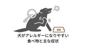 犬がアレルギーになりやすい食べ物と主な症状