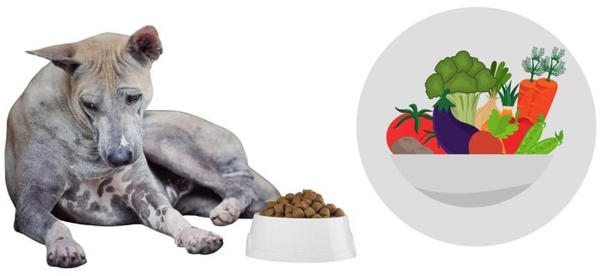 ごはんを食べない老犬におすすめの食べ物