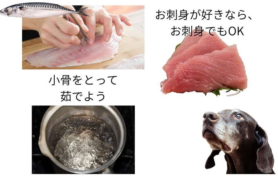 お魚を犬に与える時の注意点