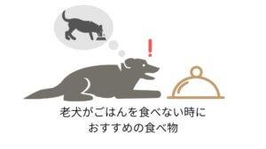 老犬がごはんをたべない時におすすめの食べ物
