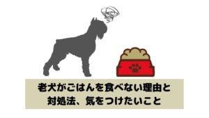 老犬がごはんを食べない理由と対処法、気をつけたいこと