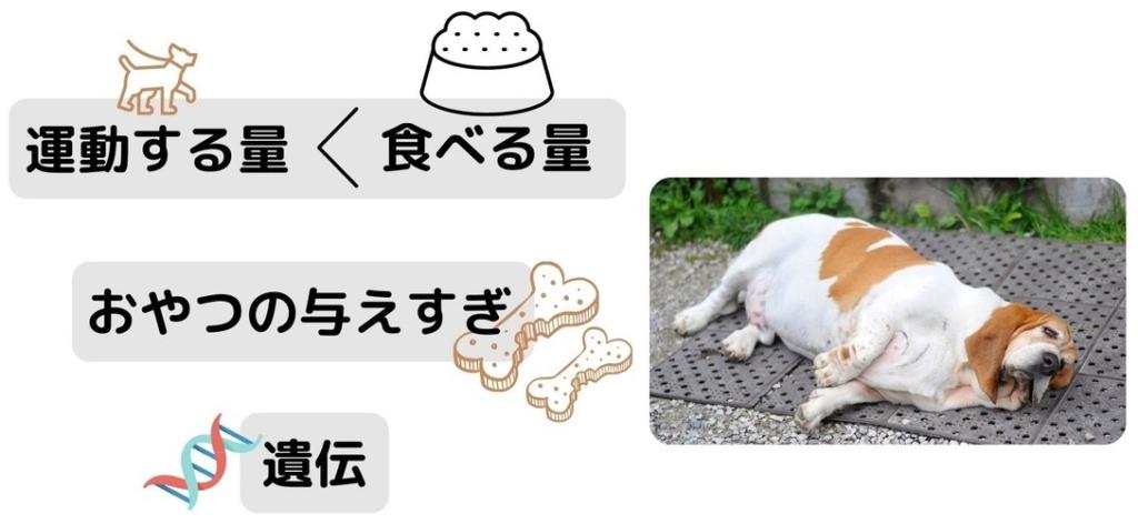 【診断つき】あなたの愛犬が肥満になる原因とダイエット方法
