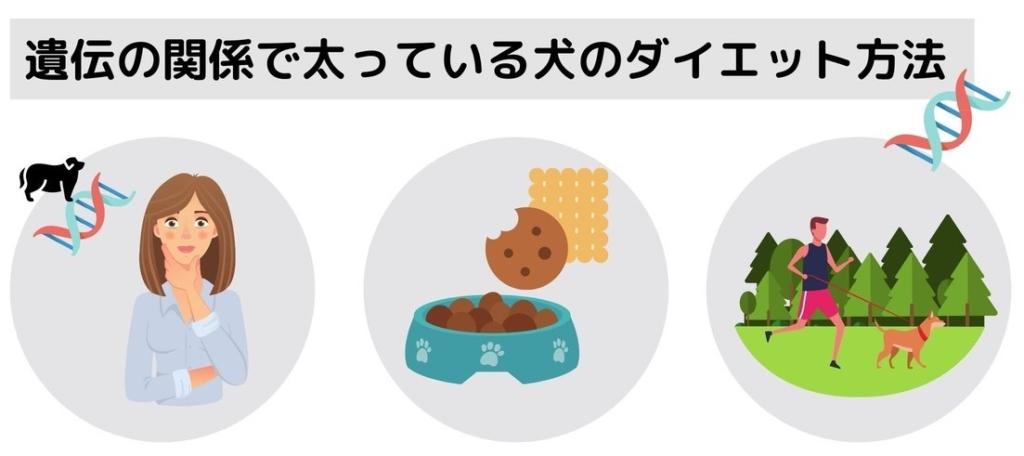 遺伝の関係で太っている犬のダイエット方法