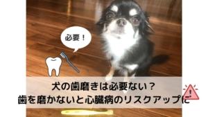 犬の歯磨きは必要ない?歯を磨かないと心臓病のリスクアップに