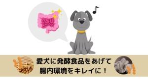 愛犬に発酵食品をあげて腸から元気に!スーパーで買えるおすすめの発酵食品