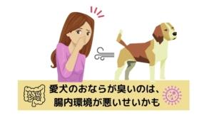 愛犬のおならが臭いのは、腸内環境が悪いのかも