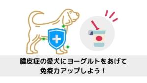 膿皮症の愛犬にヨーグルトをあげて免疫力アップしよう!