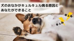 犬のおなかがキュルキュル鳴る原因とあなたができること